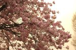 Spring Tree II by LoveForDetails