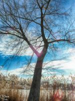 Tree near lake by UAkimov09