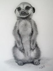 Meerkat by love-to-portray