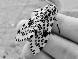 leopard moth by becomingnothing