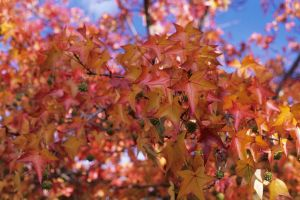 Autumn leaves by imroy