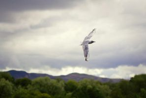 Fly On. by Sarah-BK