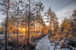 Sunrise in a bog by sulevlange
