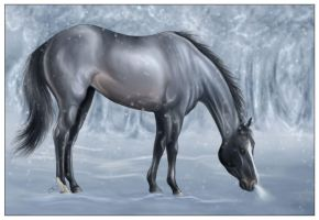 Winter Snow by equinewoods