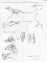 Big Wyvern anatomy by MilaHigher