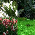 Free plants and flowers image pack by Sinto-risky