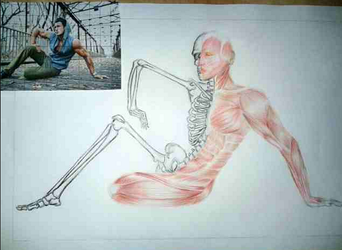 Human Muscle Anatomy. by cristelmica