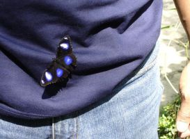 Another butterfly by littlechina