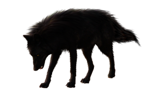 BlackWolf by RAYNExstorm