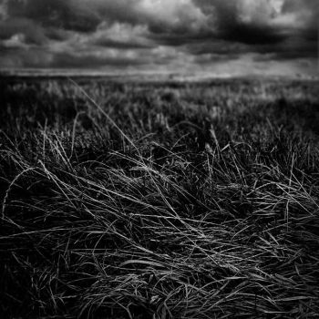 dispersiveness grassland by calis