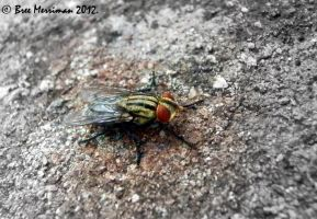 Bush Fly by BreeSpawn