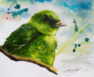 Green Fruit Dove by SunStateGalleries