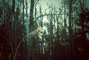 in.the.tall.grass by sarah-marley