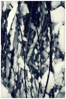 Thicket by ciseaux