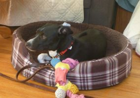 Lupin's new bed by usedbooks