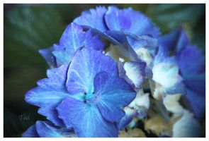 A Happy Blue, For a Special You by TeaPhotography