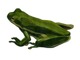 Green Treefrog by NathanLParker