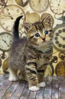 Kitten time by hoschie