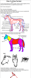 How to draw horses - part 1 by Darkness-Tears