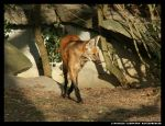 Tasty Dog Nose by leopatra-lionfur
