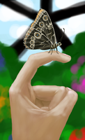 At the Butterfly House by HitchhikersGuide101