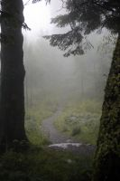 Misty Forest Stock IV by Angband