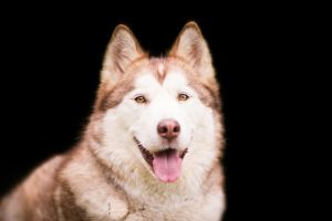 Nanook by BlackPepperPhotos
