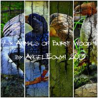 Animals on Burnt Wood Texture Pack 1 by AngelEowyn