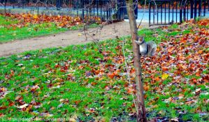 Hyde Park Squirrel by Quoth-Raven