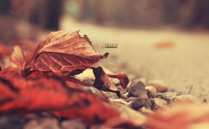 Fallen Leaves by lisarime