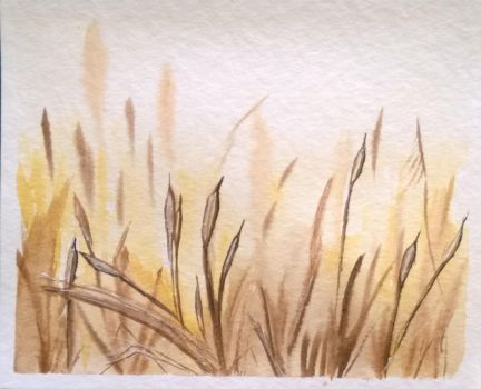 In the Reeds 20170514 by NataBold