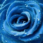 Something about blue by digitalTouch