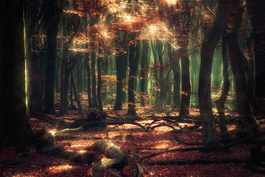 Whispers from the Woods by Oer-Wout