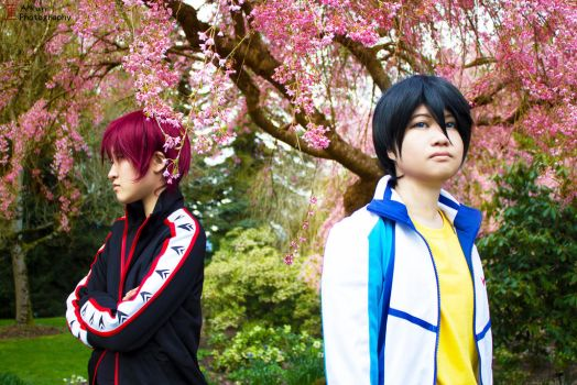 Free! Iwatobi Swim Club: Under the Cherry Blossoms by Toritogedoki