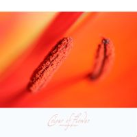Colour Of Flower by stupidHippo