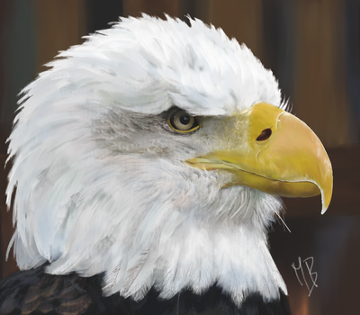 Eagle's Portrait by Miss-Blurry