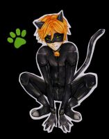 Miraculous : Chat Noir by Millen123