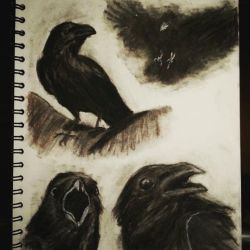 Crow study by Mextrep