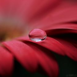pink drop. by simoendli