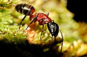 space ant by fcw77