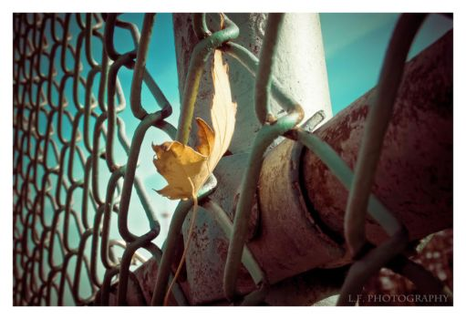On the Fence by LeahCF