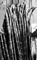 bamboo in china town by Thekapow