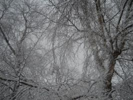 Snow Tree Two by itsayskeds