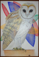 Barn Owl by S4MMY4RT