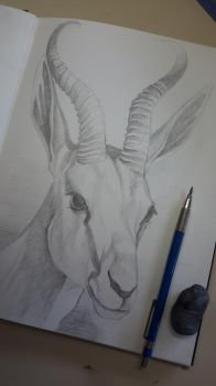 Deer - Graphite Pencil Drawing by CarolMylius