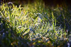 Morning grass by fotografka