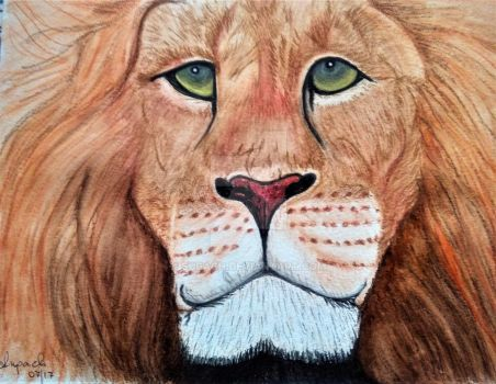 Lion Face by Supach
