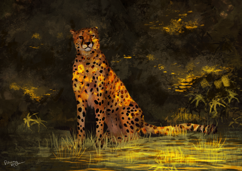 Cheetah by Paloma-McClain
