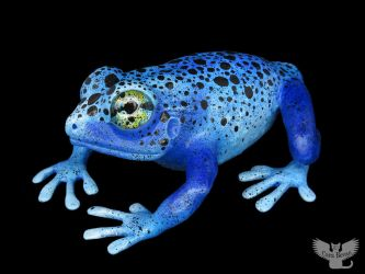 Gourd Frog #158 - Blue Poison Dart Frog by ART-fromthe-HEART