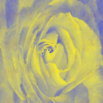 A rose by any other name.... by randthuntley